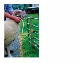 Ritchey Sheep Head Holder